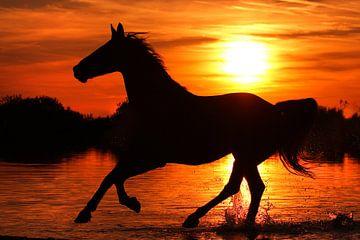 Freedom (paard in galop) van Nikki de Kerf