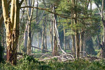 Jungle in Lake Nakuru Park Kenia van Henri Dolfing