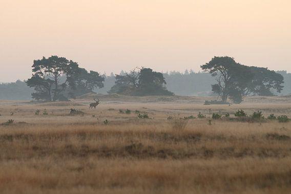 Edelhert in het nationale park de hoge veluwe van Paul Wendels