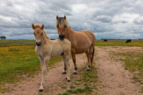 Moeder en Kind Fjord paard