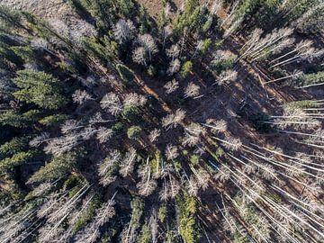 Winterbos vanuit de lucht van Jonathan Vandevoorde