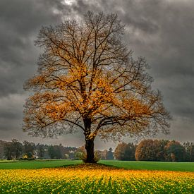 herfst in Holland van Robin Pics