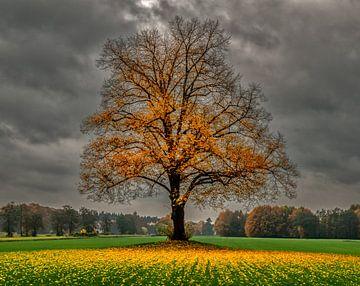 herfst in Holland sur Robin Pics (verliefd op Utrecht)