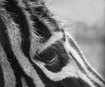 Wimpern und das Auge eines Zebras in Schwarz-Weiß. von J..M de Jong-Jansen