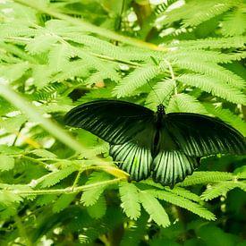 Vlinder van Hennie Zeij