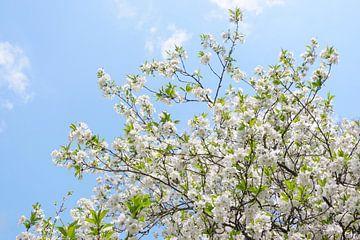 Weiße Blüte gegen einen blauen Himmel von Evelien Oerlemans