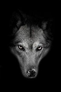 Zware snuit van een she-wolf vol gezicht van Michael Semenov