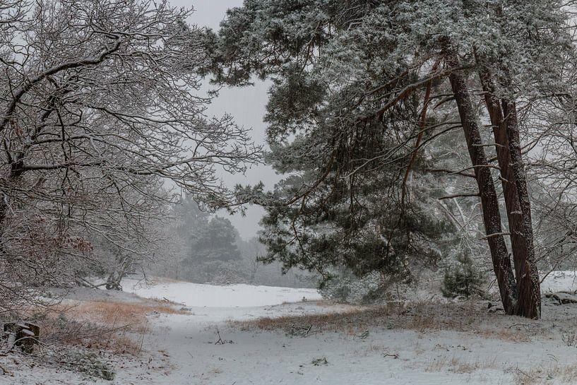 Snowy Morning van William Mevissen