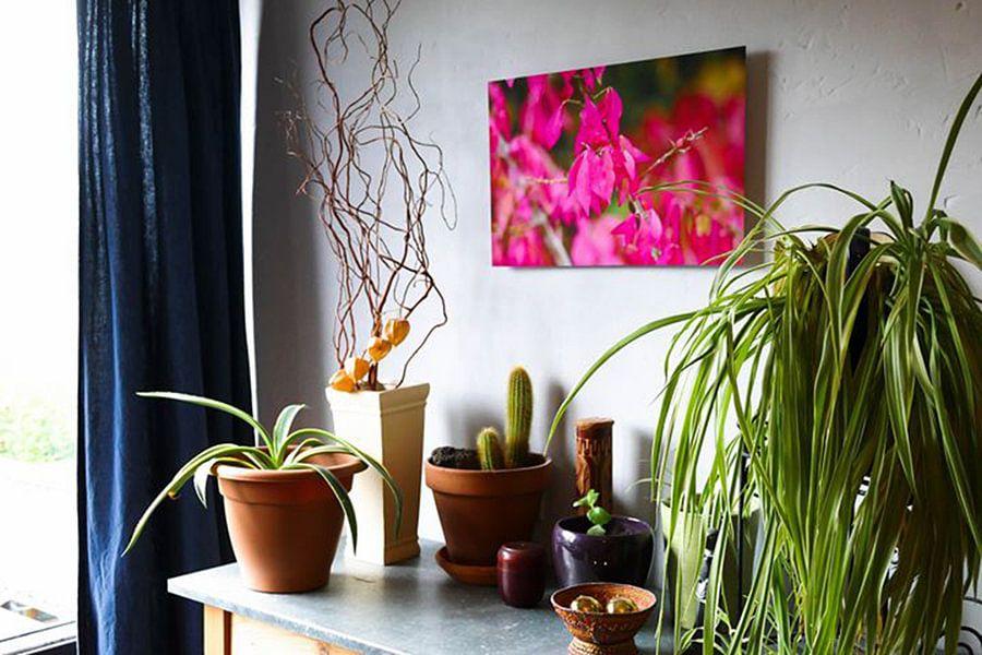 Photo de nos clients: Feuilles roses. Euonymus alatus sur Hetty Dalsheim, sur xpozer