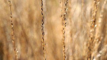 Droog gras van Eye to Eye Xperience By Mris & Fred