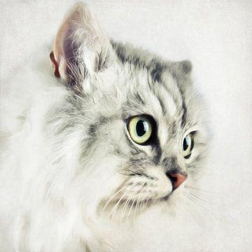 Katzenportrait van Angela Dölling