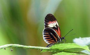 Kleine vlinder op een blad van