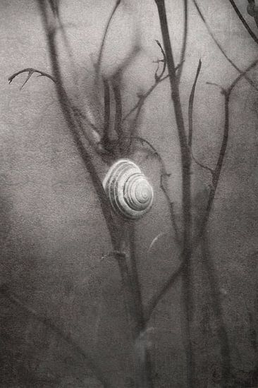 eenzaam wachtende slak