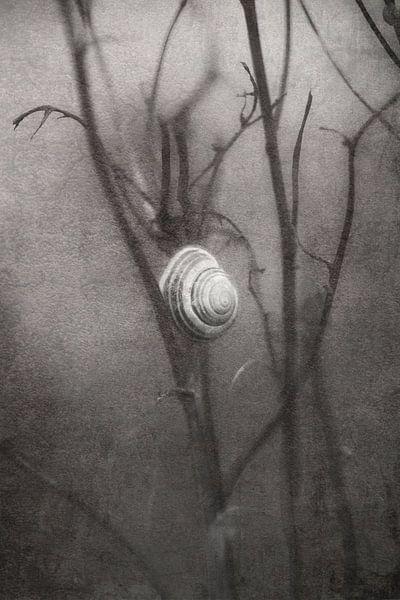 eenzaam wachtende slak von Ribbi The Artist