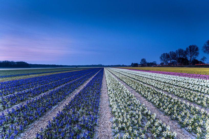 Bloemen in bloemenveld van Tom Roeleveld
