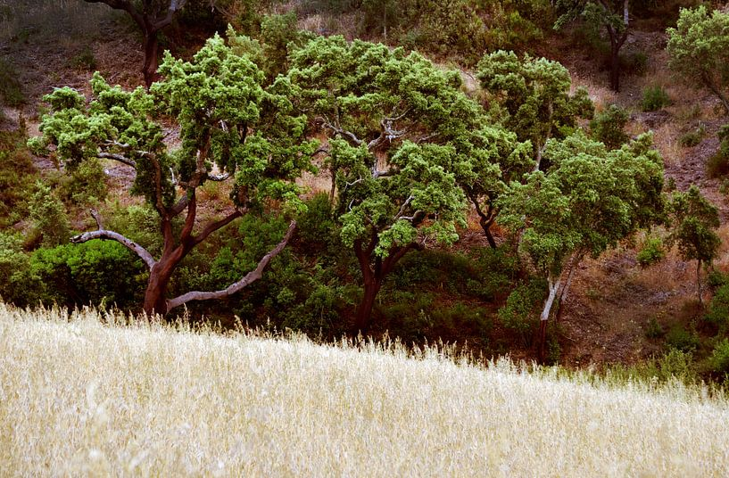 Bomen van Harrie Muis