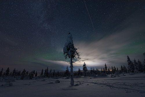 een boom in de nacht