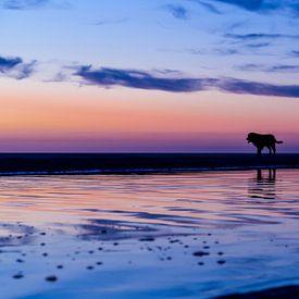 Man en vrouw laten de hond uit op het strand bijzonsondergang van Marcel van den Bos