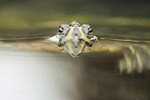 Schildpad op de loer von Frouwkje Fotografie