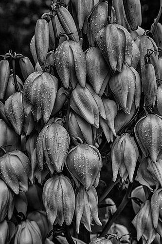 Blumen in Schwarzweiss
