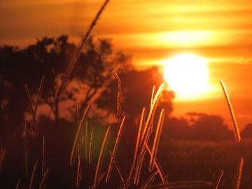 Zonsondergang in Afrika von Kim van de Wouw
