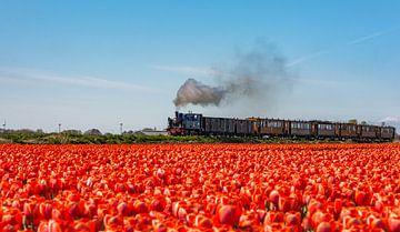 Tram traditionnel de vapeur dans Oostwoud (Les Pays-Bas) sur Ardi Mulder