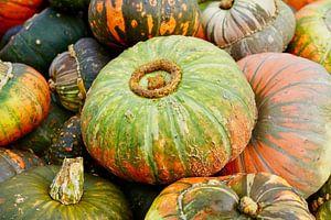 Kleurrijke sierpompoenen in de herfst van HGU Foto