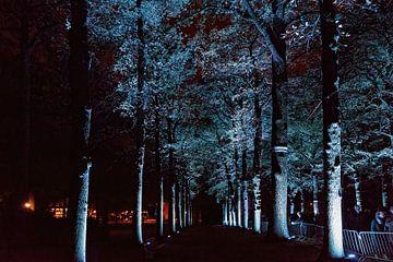 Glühen: Mysteriöse Bäume von Rob Boon