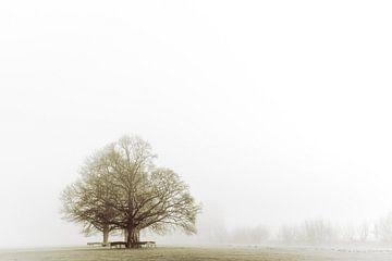 Boom in de mist van Joost Potma