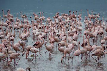 Flamingo's van Daisy Janssens