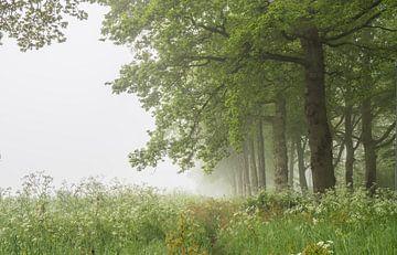 mistige lente van Tania Perneel