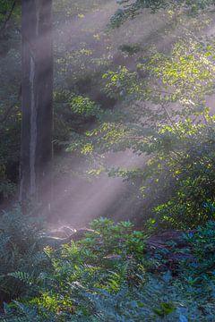 zonneharpen door bos van eric brouwer