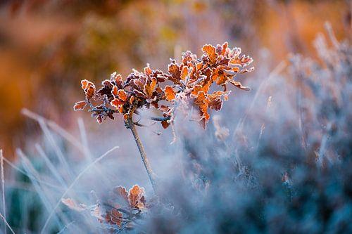 Kerst corsage van Tvurk Photography
