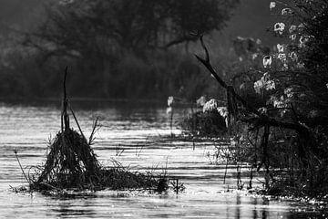 Rivierbeeld Okavanga van Henri Kok