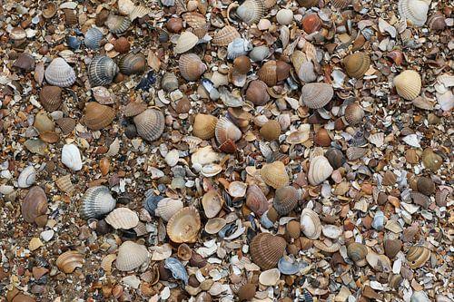 schelpen op het strand in zeeland