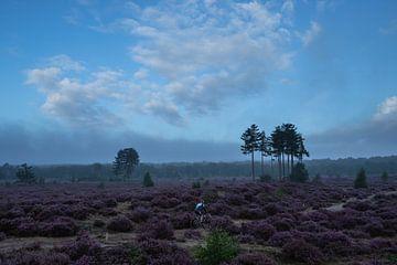 Heideveld Utrechtse heuvelrug Den treek Amersfoort mountainbike van Peter Haastrecht, van