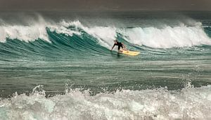 Surfer van Harrie Muis
