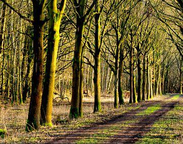 Hirsche im Wald. von Brian Morgan