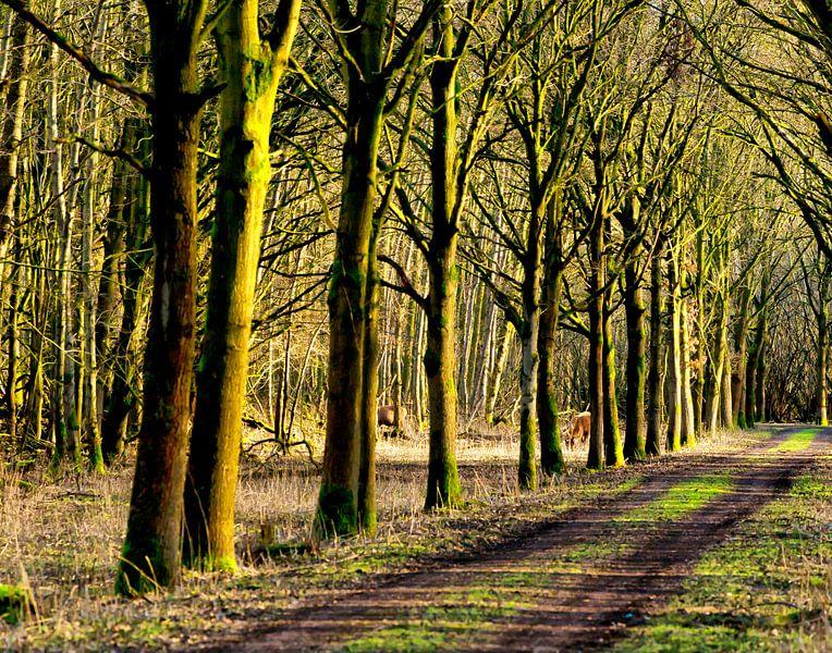 Herten in het bos. van Brian Morgan