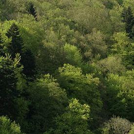 bossen in Duitsland sur Mirjam van Ginkel