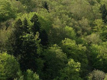 bossen in Duitsland van Mirjam van Ginkel