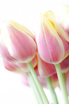 Tulpenpracht van Sonja Onstenk