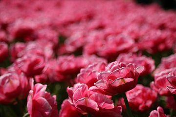 Bloemen, Roze, tulpen,  van Wilma Meurs