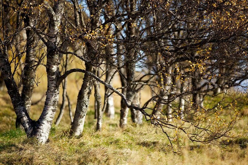 Bomen van HANS VAN DAM