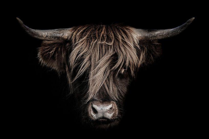 Schottischer Highlander mit dunklem Hintergrund von Steven Dijkshoorn