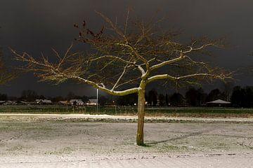 Een prunus in de avond met sneeuw van Lieke van Grinsven van Aarle