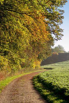 walk in the autumn van