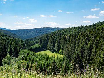 Uitzicht over het Thüringer Woud in Duitsland van Animaflora PicsStock