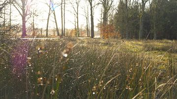 Zonnestraal door het gras van Esmée Kiezebrink