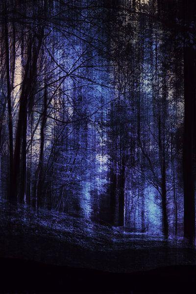 nacht bos,  van Christine Nöhmeier